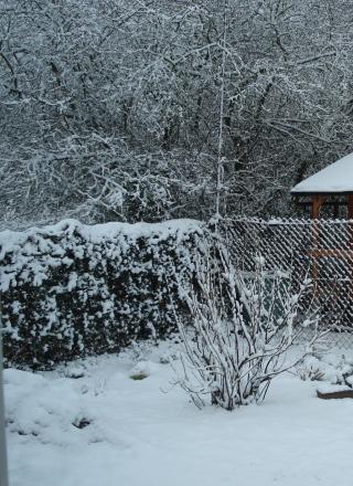 Johannisbeere im Winter